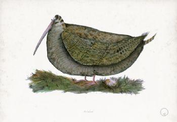 Woodcock - artist signed print